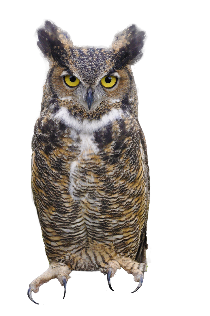 Horned owl png. Great by justmetd