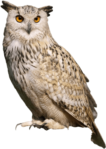 Horned owl png. Download hd free sitting