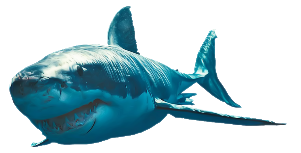 Great white shark png. Vs battles wiki fandom