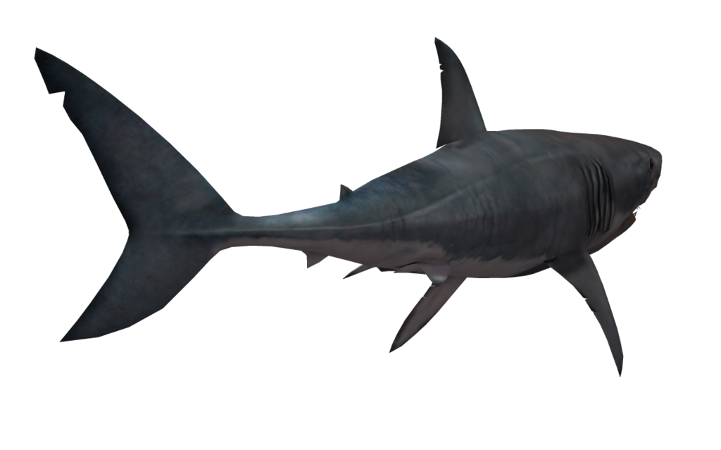 Great white shark png. Transparent pictures free icons