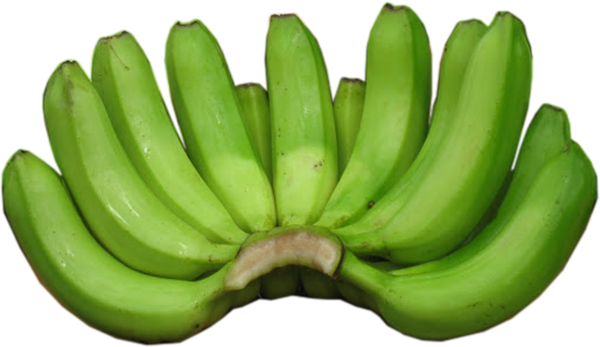 Green banana png. Gallery cavendish producer supplier
