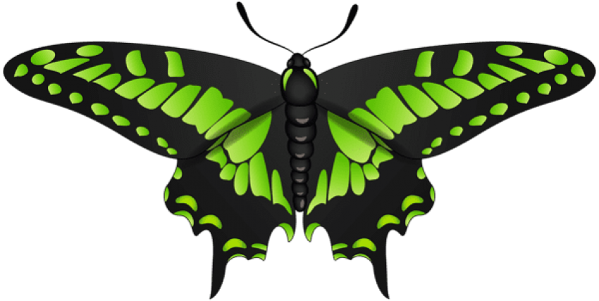 Green black png. Download butterfly clipart photo