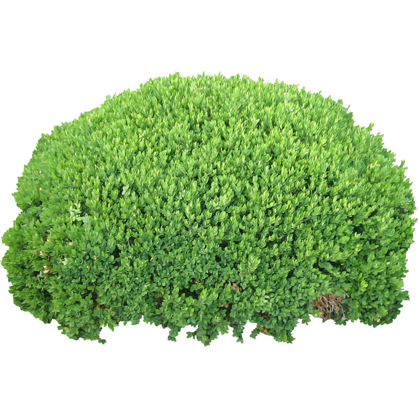 Green bush png. Image purepng free transparent