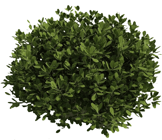 Green bushes png. Bush transparent stickpng nature