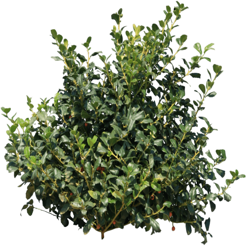 Green bushes png. Bush free images toppng
