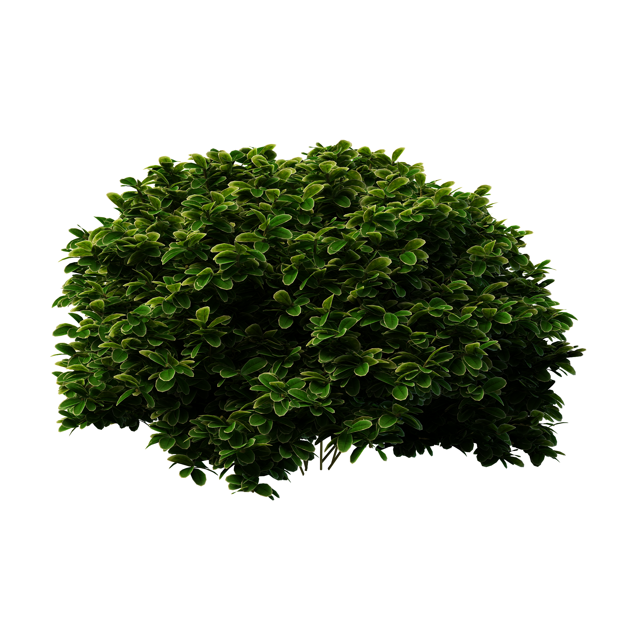 shrubs silhouette png