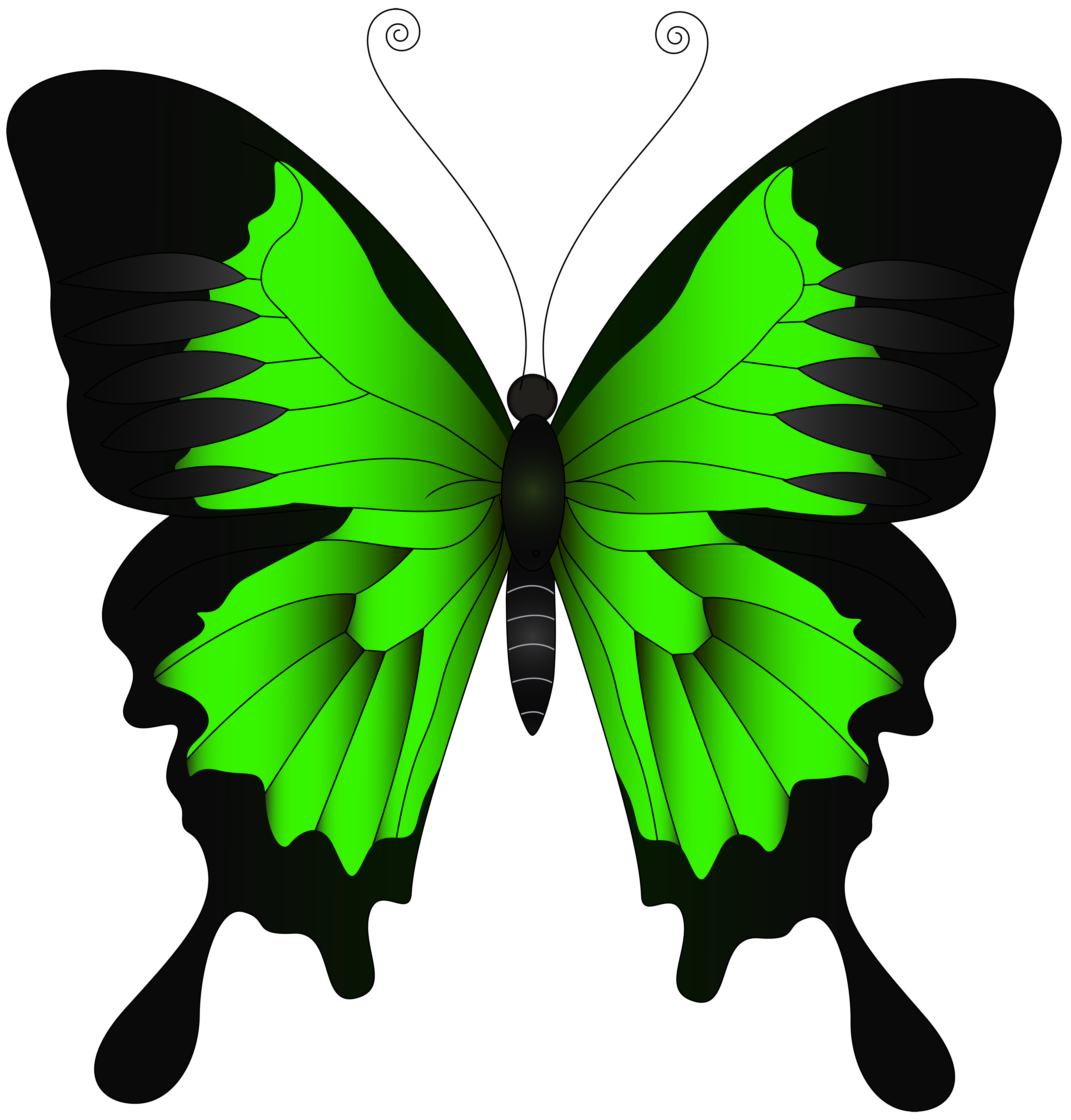 Green butterfly png. Clip art image gallery