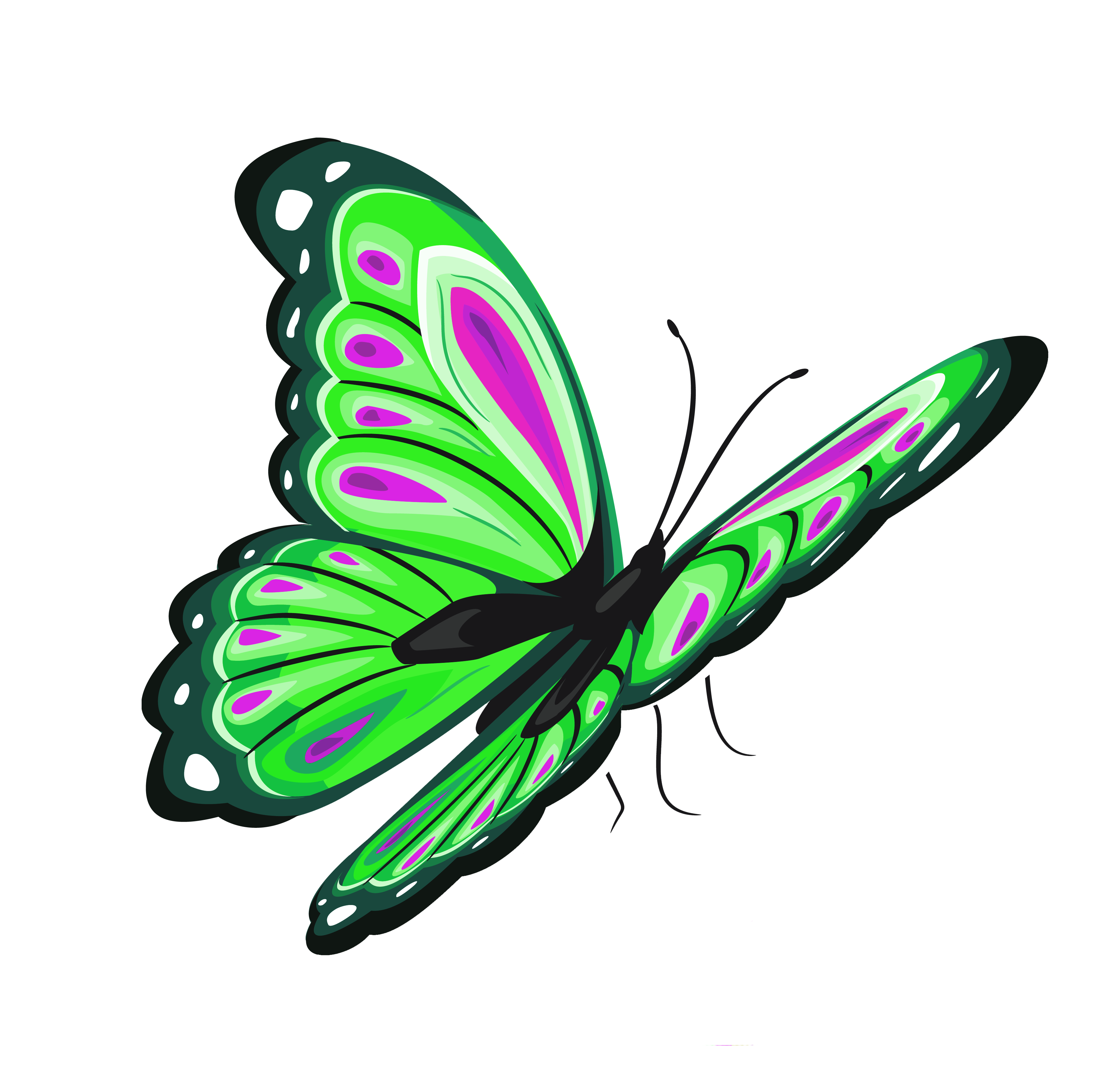 Green butterfly png. And pink clipart picture
