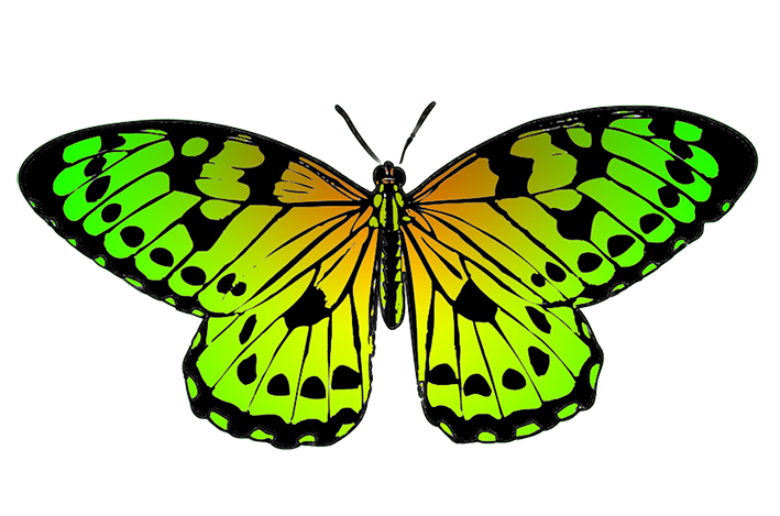 Green butterfly png. Clipart tropical image