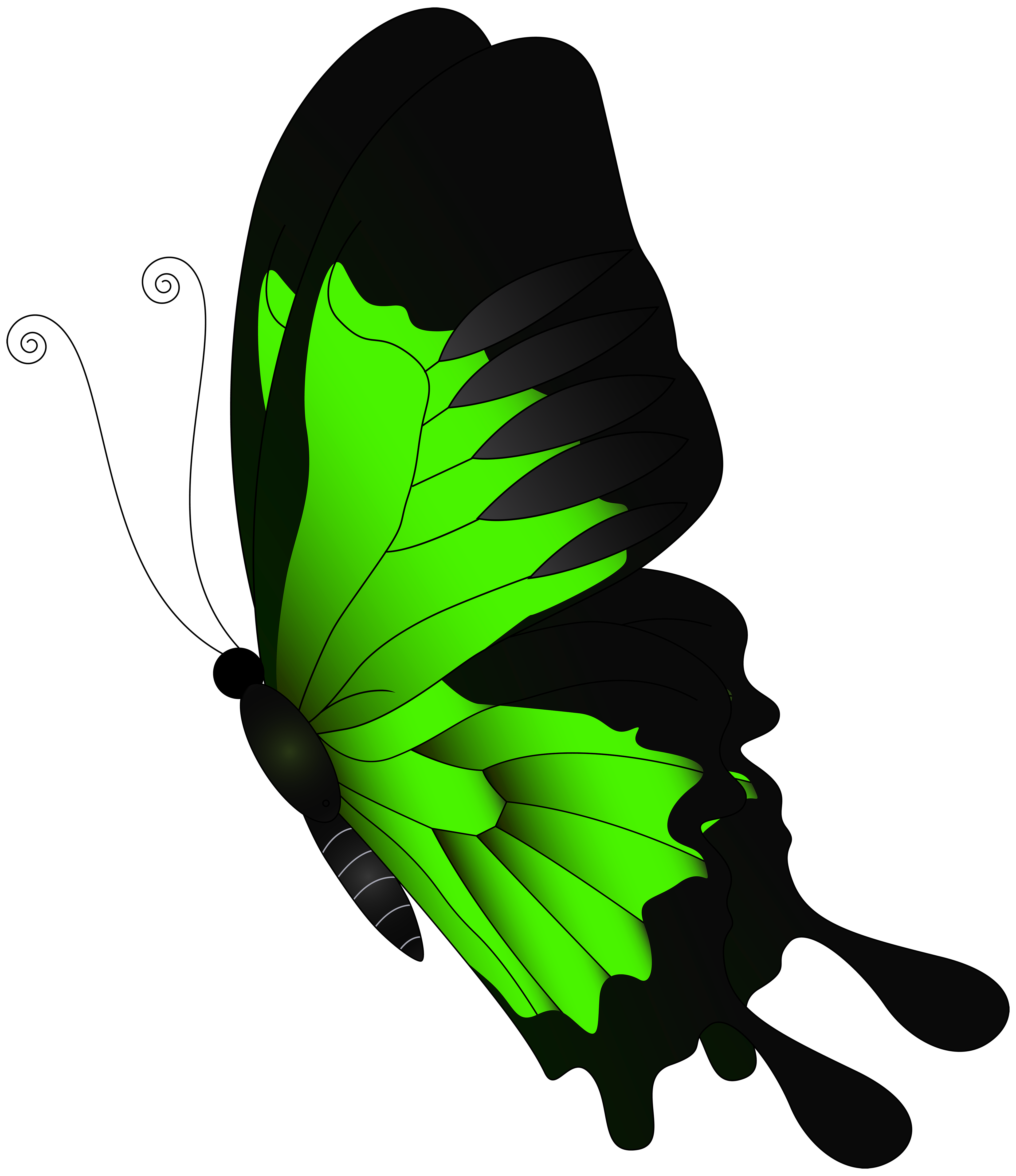 Green butterfly png. Clip art flying transprent