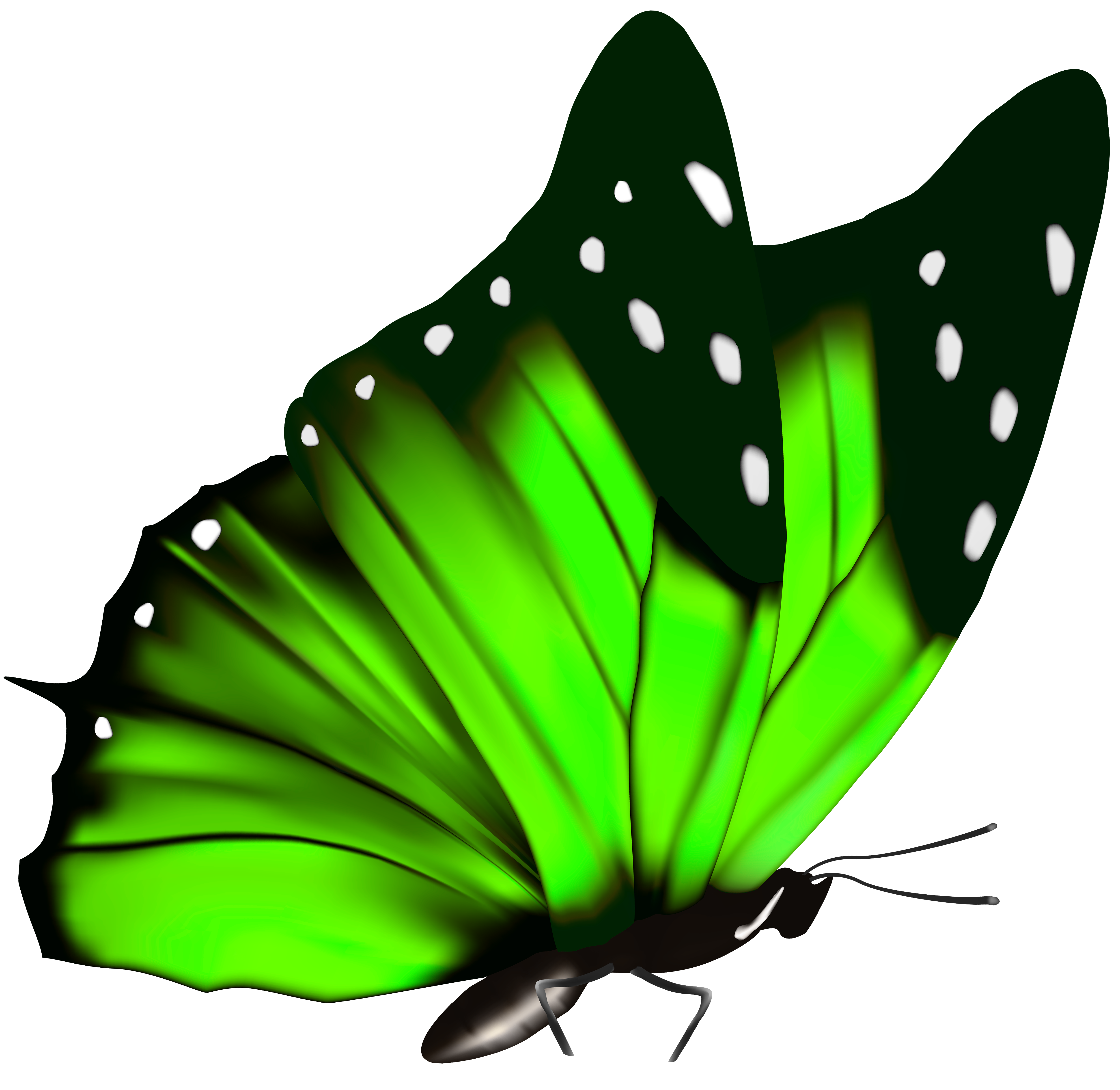 Green butterfly png. Clipart image gallery yopriceville