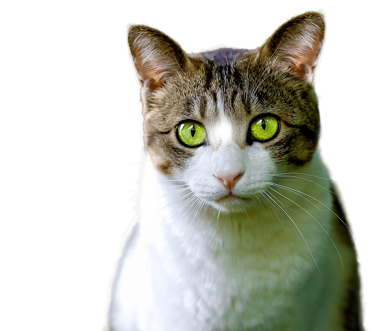 Transparent stickpng. Green cat eyes png banner royalty free