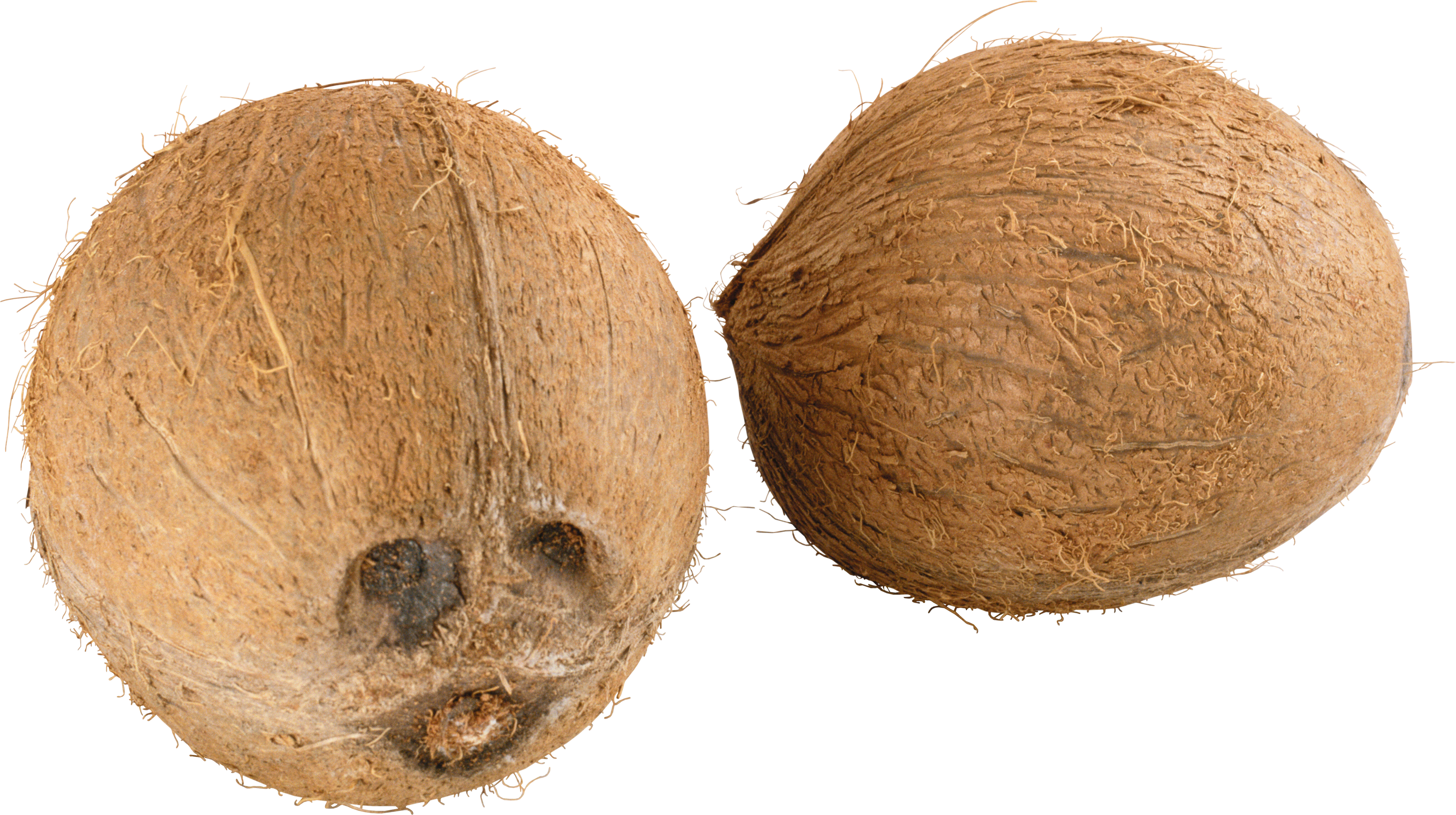 Green coconut png. Images free download image