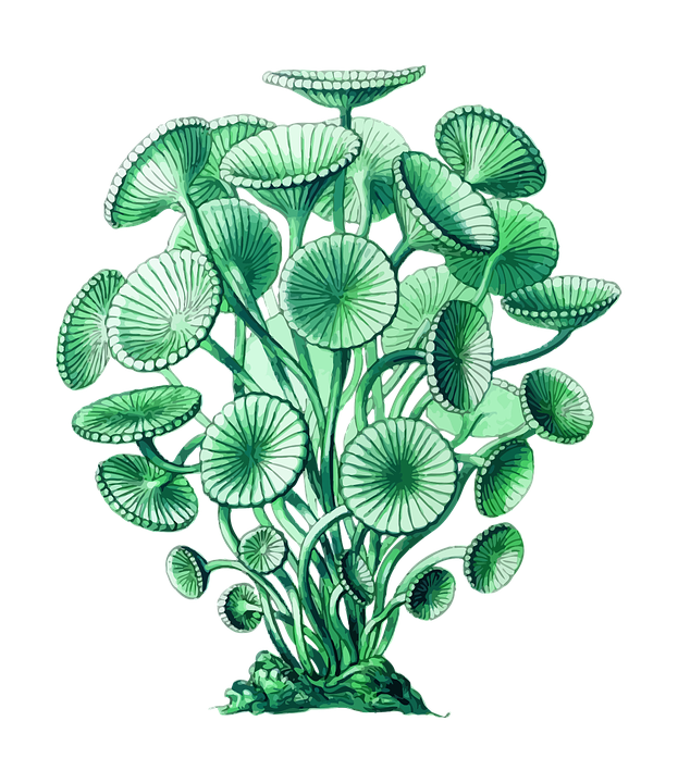 Green drawing detailed. Collection of free algae