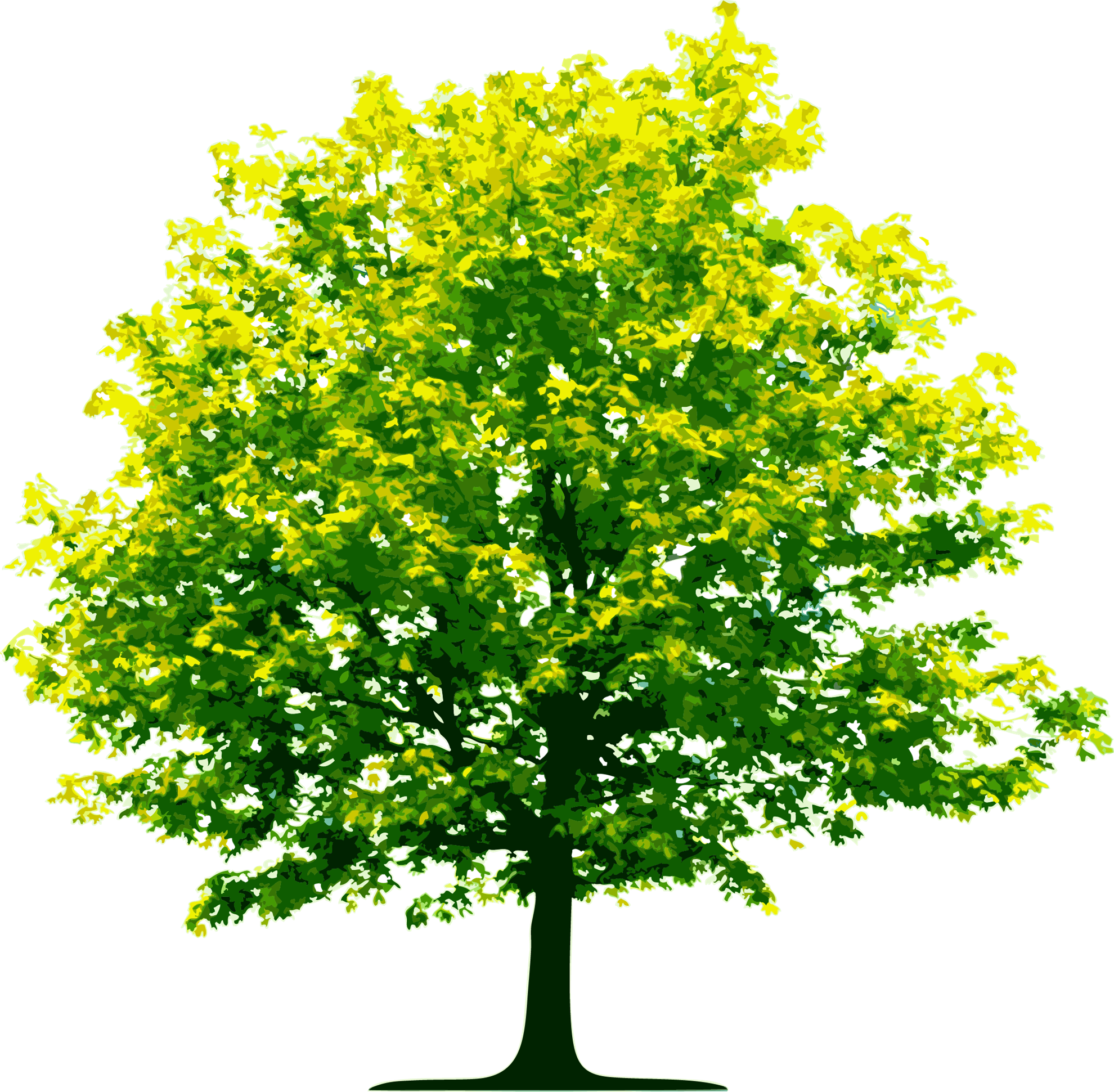 Green drawing tree. June attendance rotary club