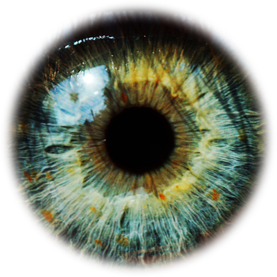 Green eye png. Transparent pictures free icons