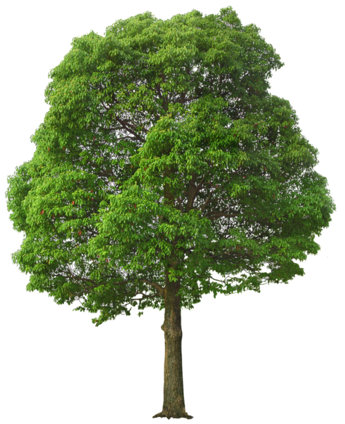 Green garland png. Large tree picture photoshop
