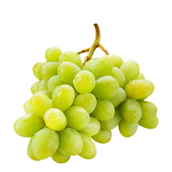 Grape transparent green. Grapes handwproduce