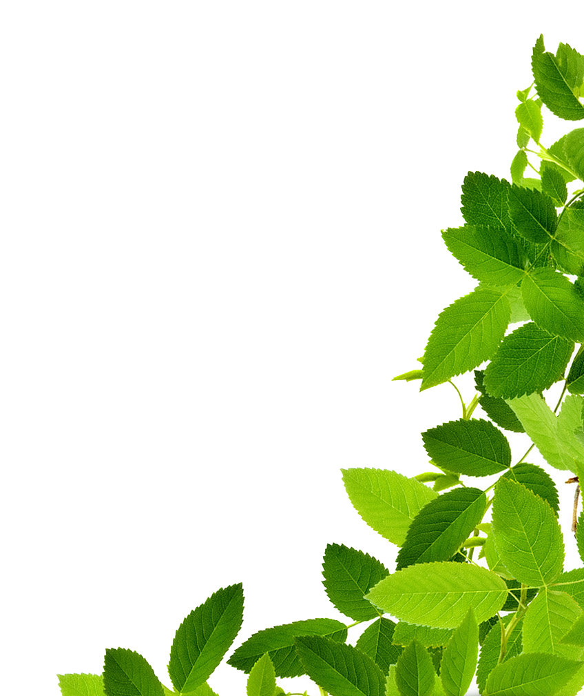 Green leaves png. Download image clipart peoplepng