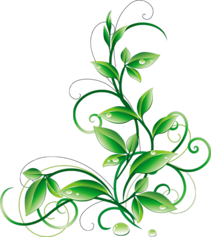 Green floral png. Leaves and water droplets