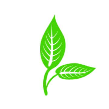 Leave vector plant. Fall leaves png images