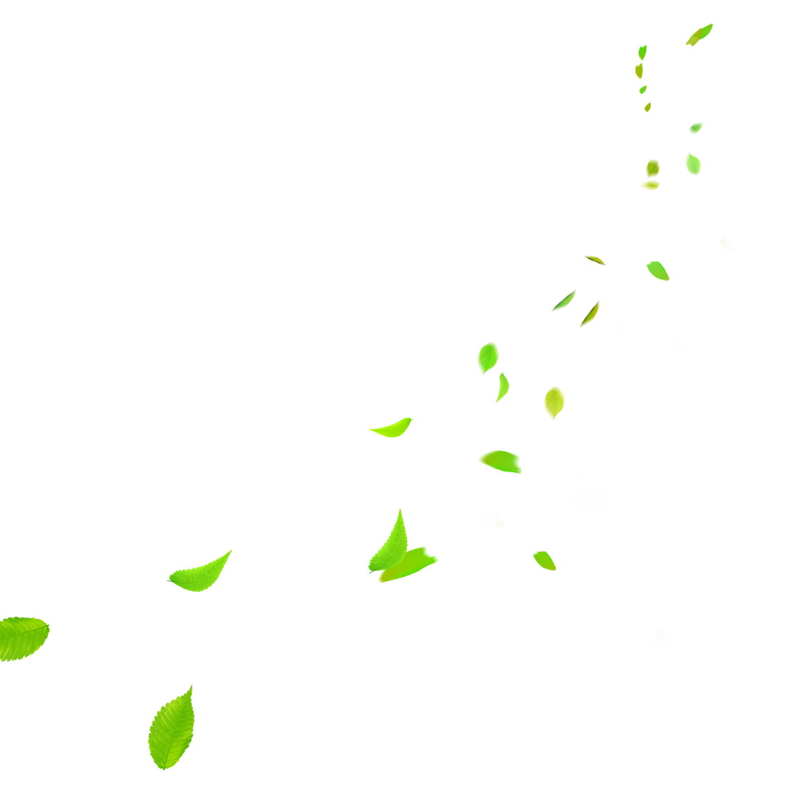 Green leaves falling png. Clip art clear transprent