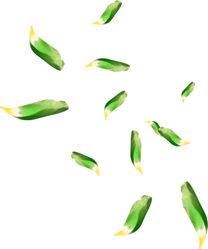 Green leaves falling png. High quality image arts