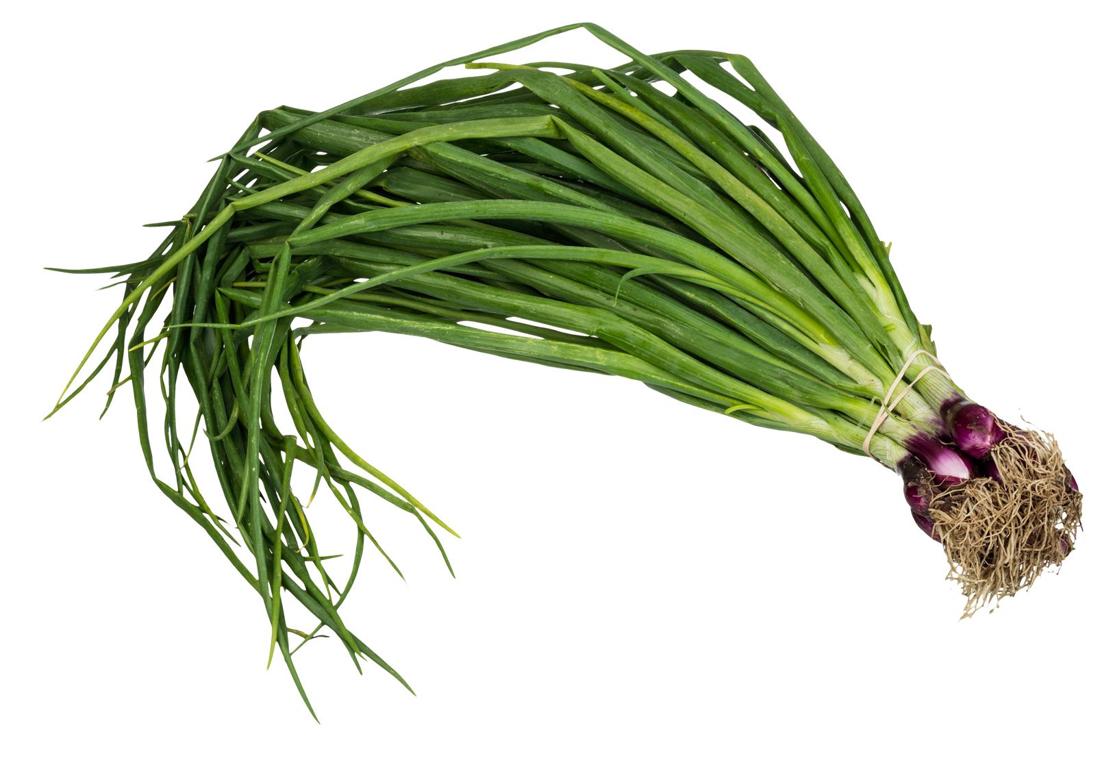 Green onions png. Scallion spring onion image