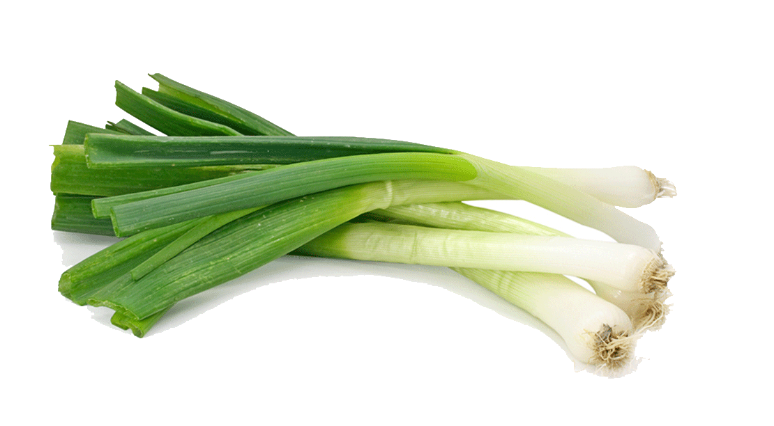 Green onions png. Scallion shallot vegetable garlic