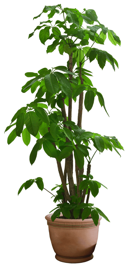 Png plants. Flowers images free