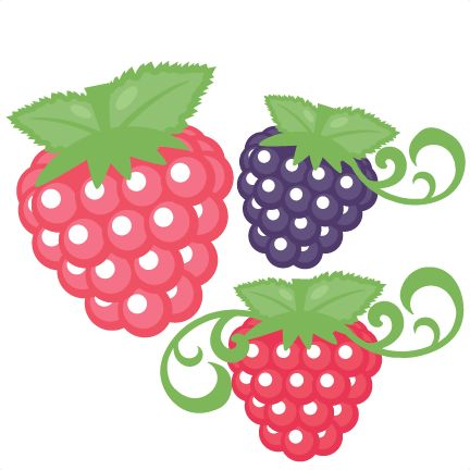 Green raspberry. Clipart free download best