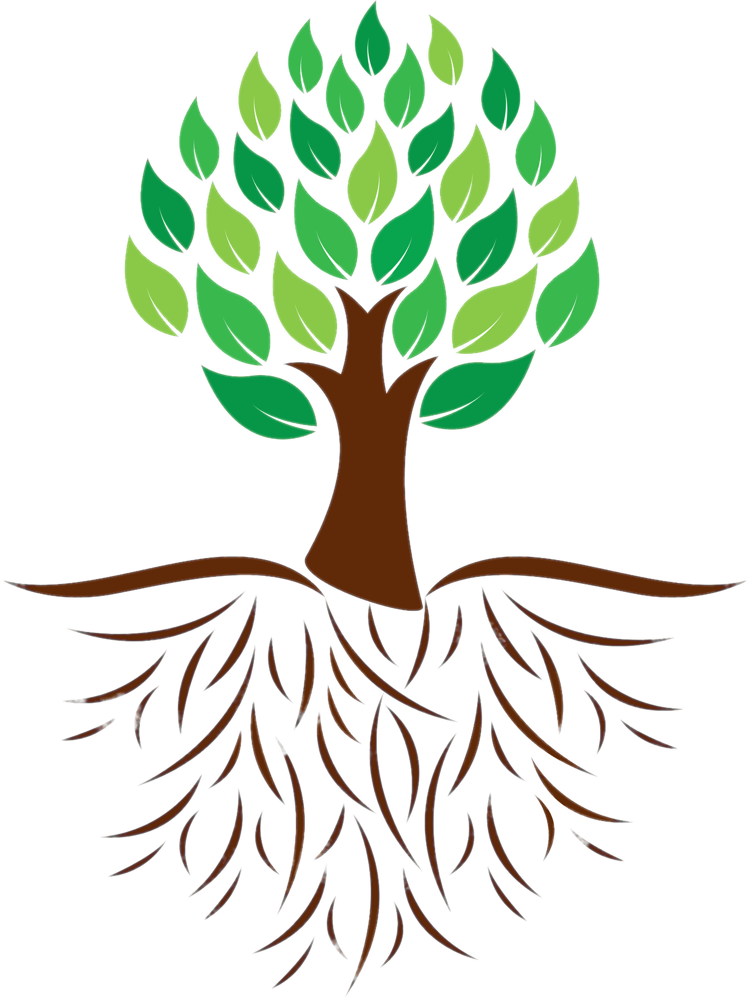 Green roots png. Tree and colour illustration