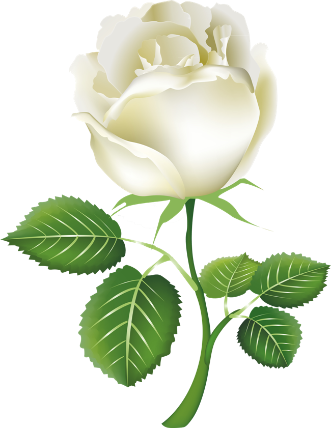 Green rose png. White image flower picture