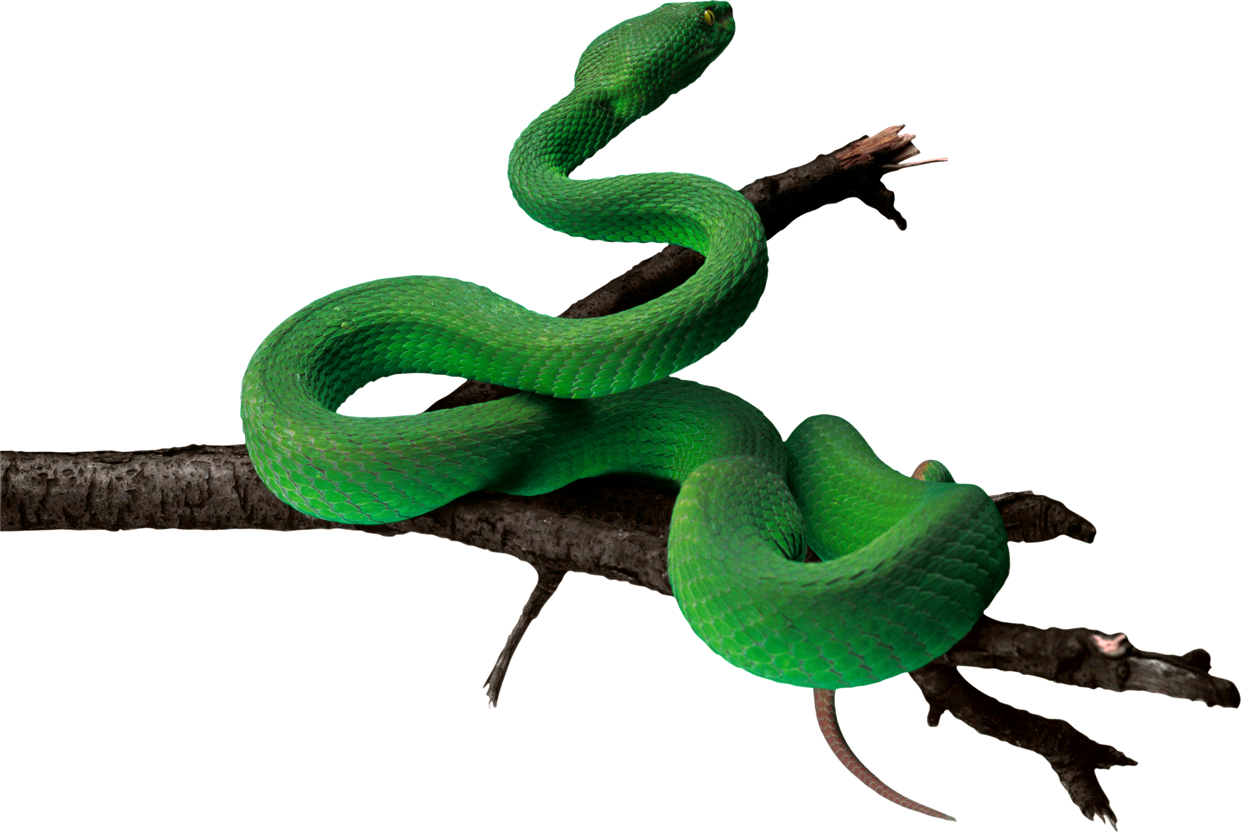 snake tail png