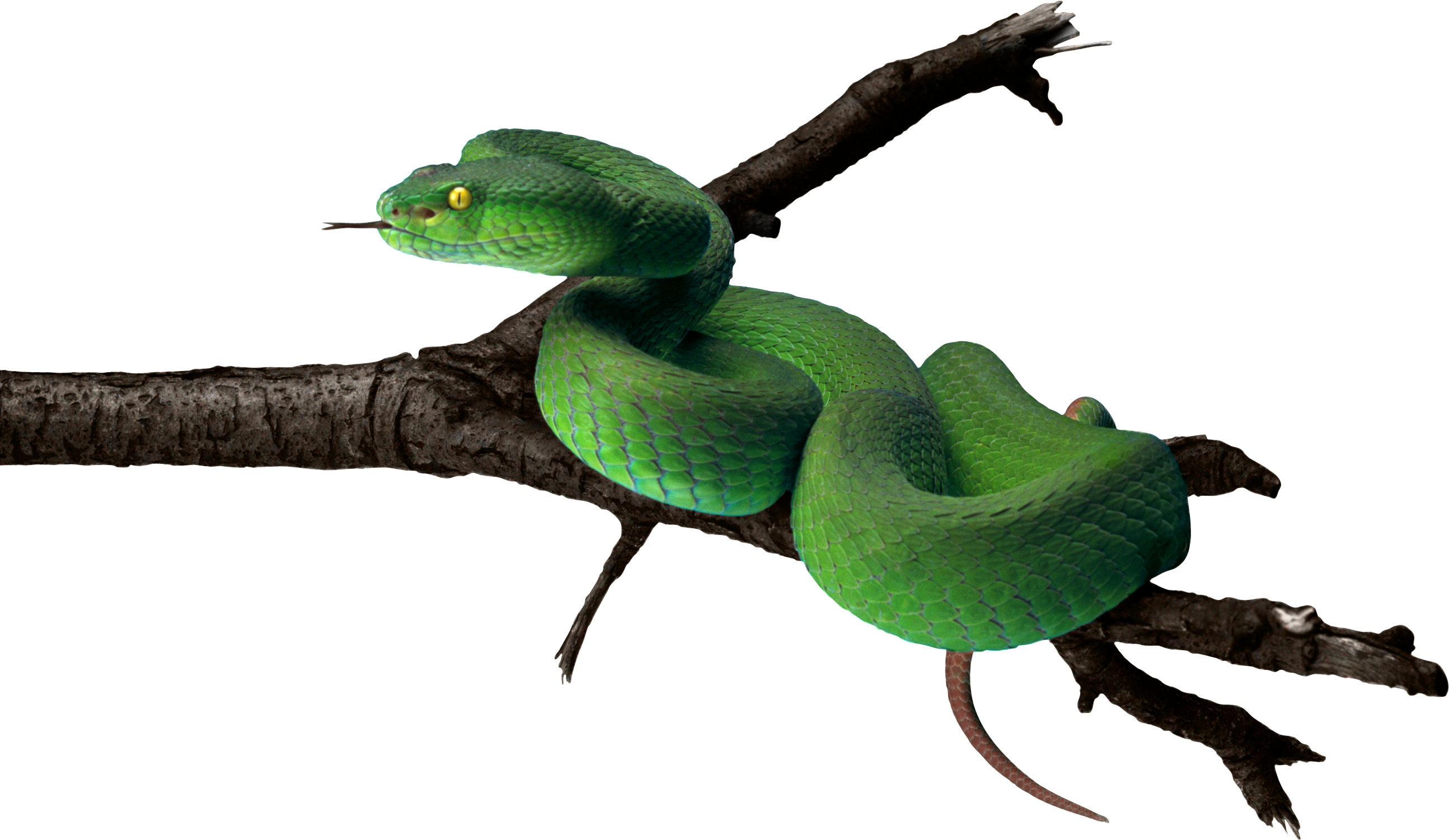 Green snake png. Image free download picture