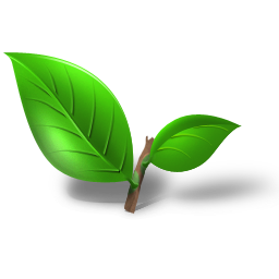 Green tea leaf png. Image royalty free stock