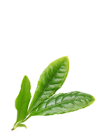 Green tea leaves png. Repower for energy and