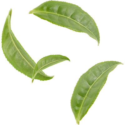 Tea leaves png. Sencha mighty leaf