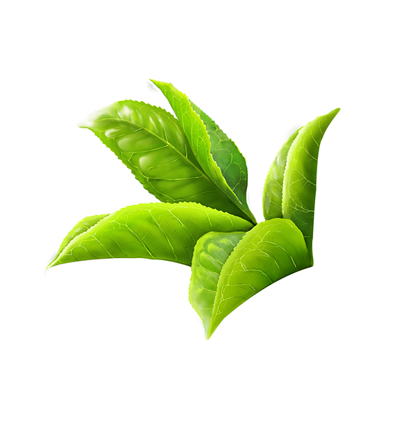 tea leaves png