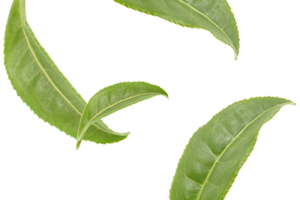 Green tea leaves png. Leaf image related wallpapers
