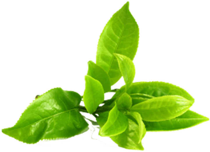 Tea leaves png. Download hd green image