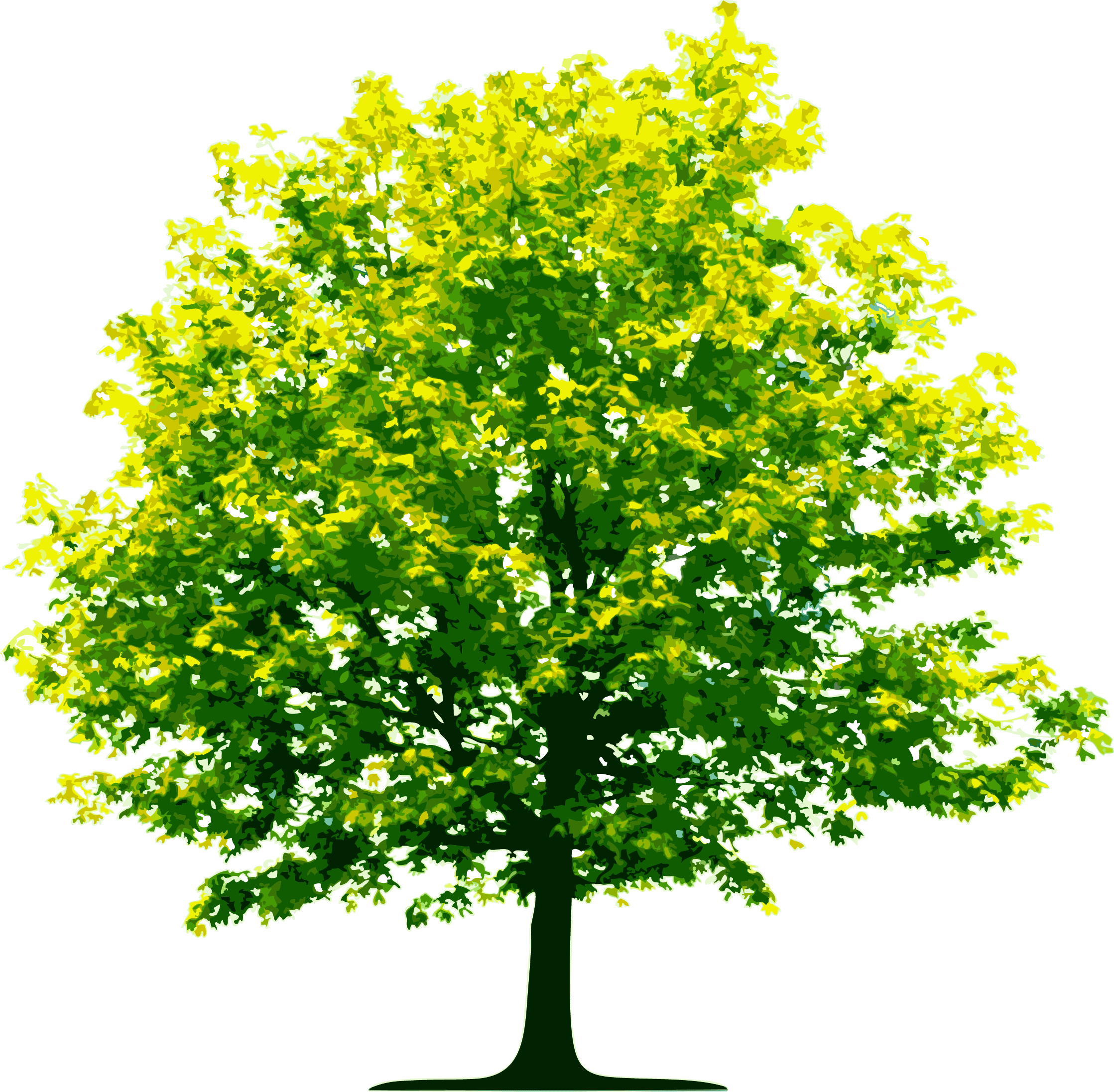 Tree graphic png. Light green transparent stickpng