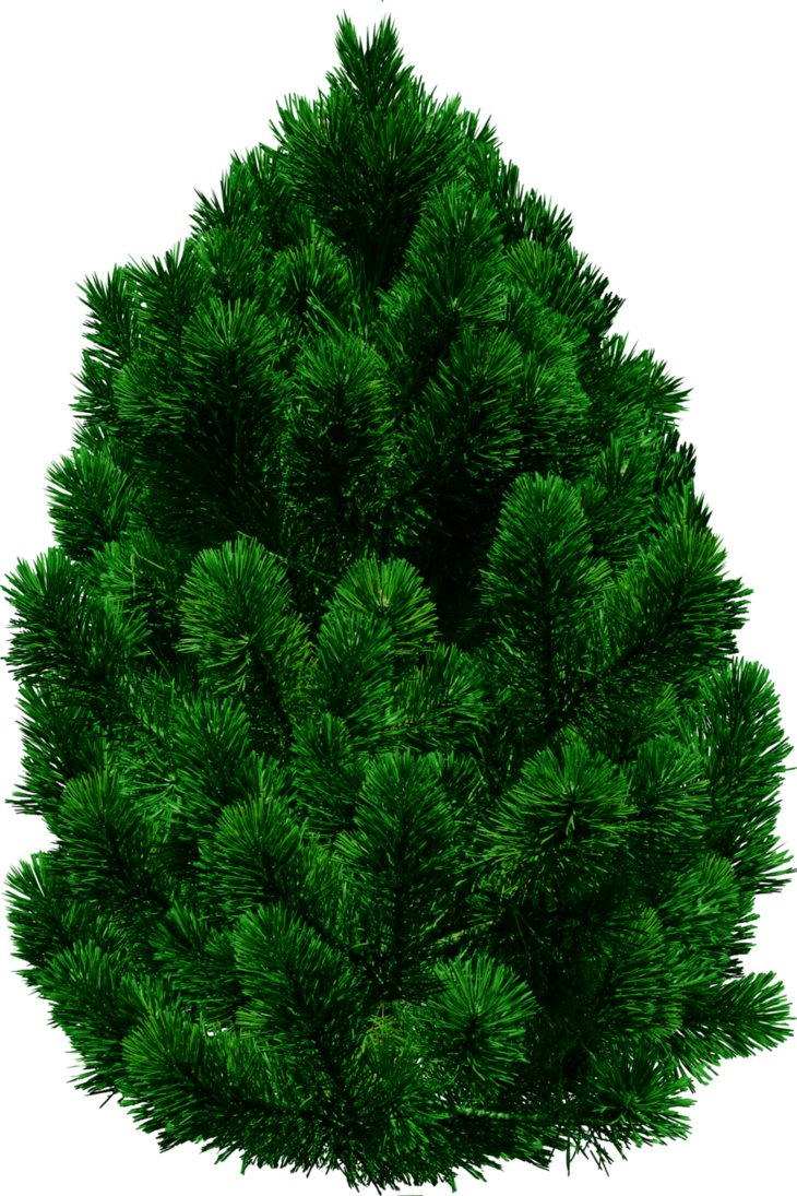 Tree by dbszabo on. Pine trees png clip free library