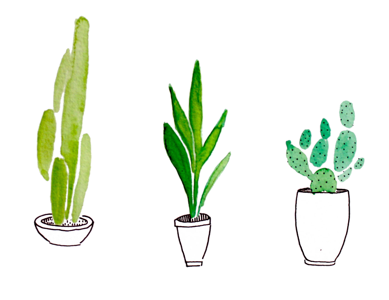 Green Drawing Cactus Transparent & PNG Clipart Free Download - YA