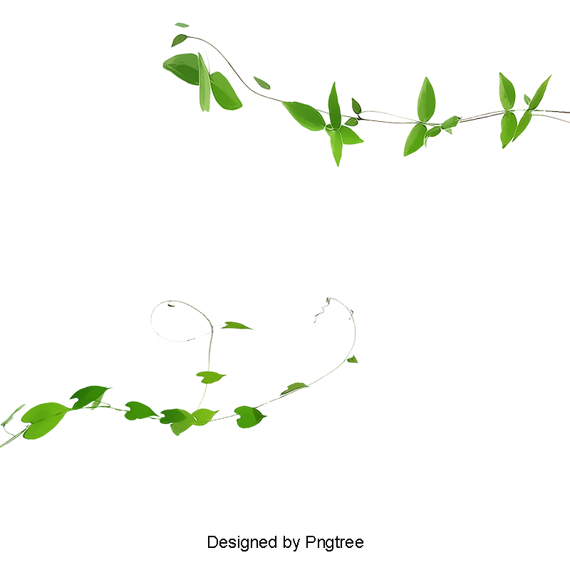 Ivy png. Vines plant green and