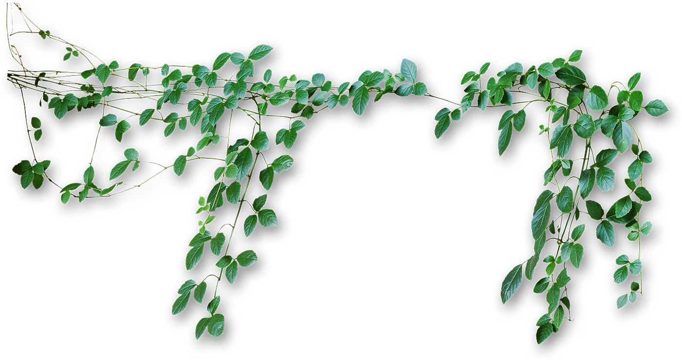 Green vines png. Transparent pictures free icons