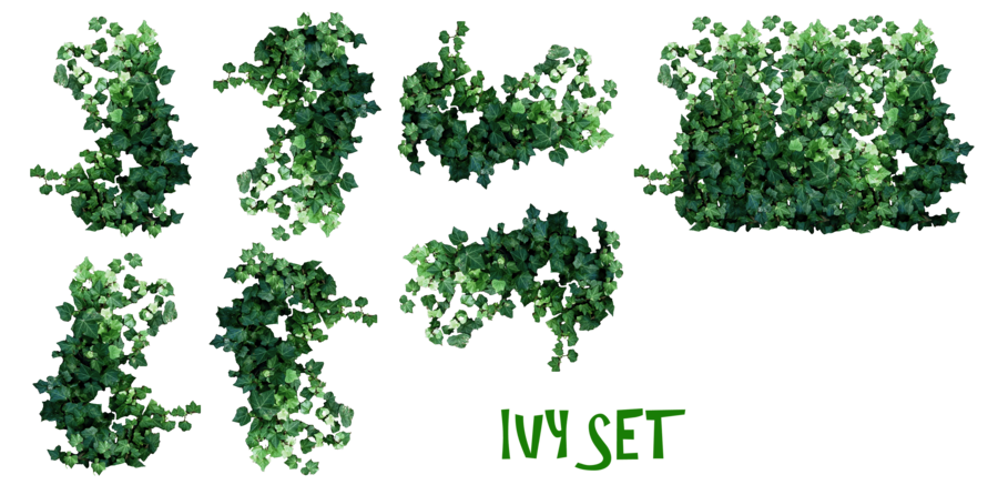 Green plants png. Transparent images all download