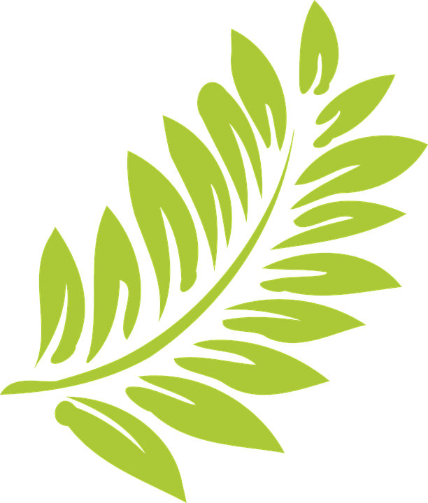 Hoja vector leaf. Foliage clipart different leave