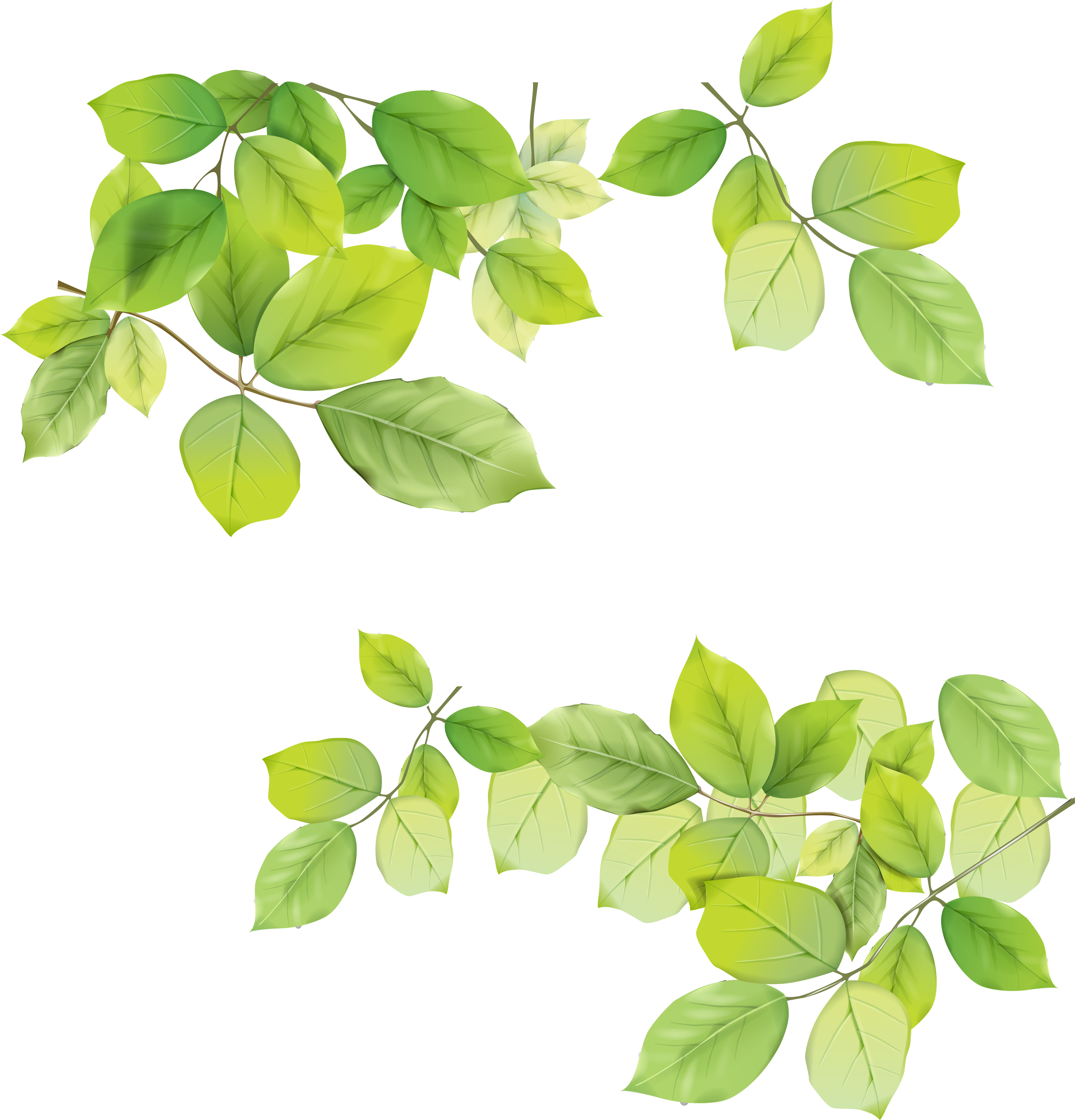 Greenery vector foliage. Leaves png pesquisa google