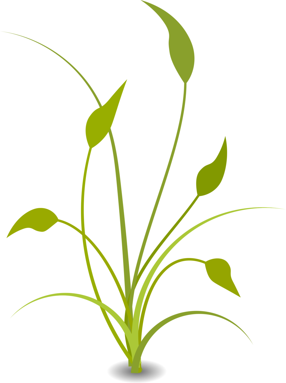 Greenery vector plant. Illustration of a